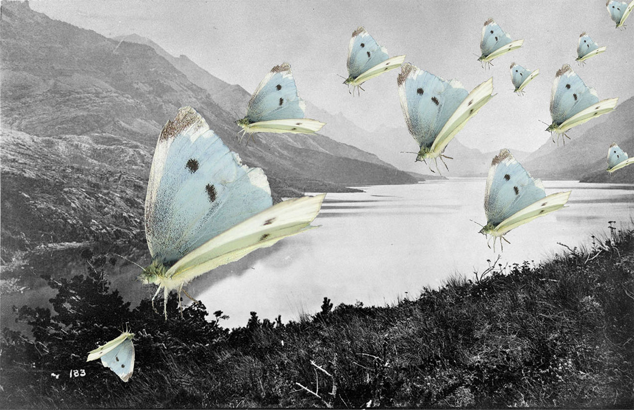 Dawson 1874 photograph with butterflies collaged from a 2009 migration in Waterton Lakes National Park, Alberta