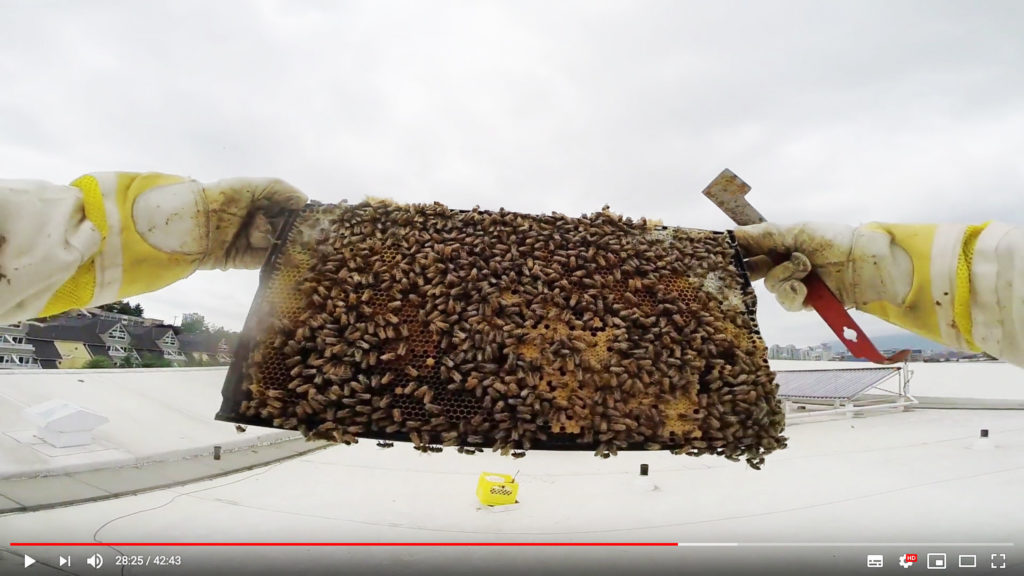 A still image showing a beehive inspection. Two hands hold a rectangular hive with bees in the air. A cloudy sky and rooftop location.