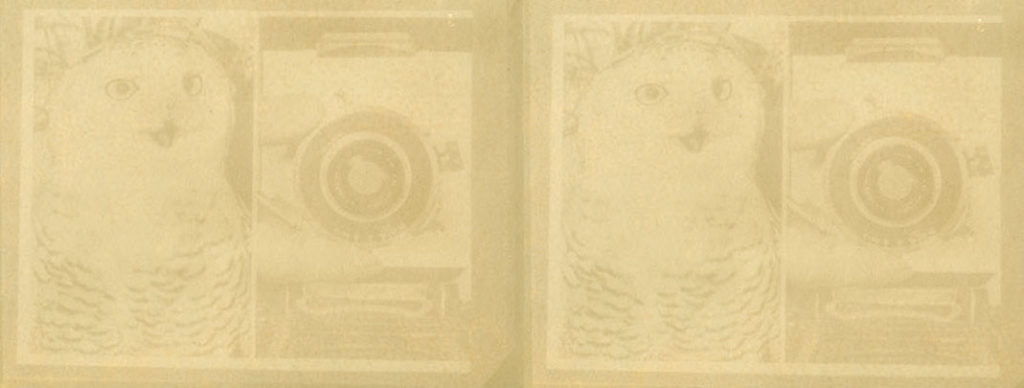 detail of an Anthotype by artist Trudi Lynn Smith, made from stinging nettle and a photograph from the Associated Press Archive, showing an owl and a camera.