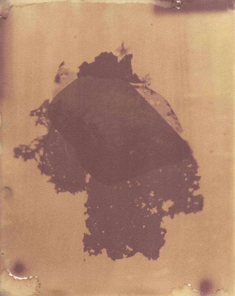 anthotype showing purplish yellow tulip emulsion with compost print in the center
